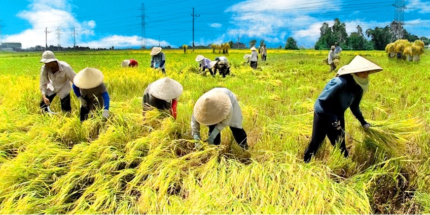 KUBOTA - Máy Nông Nghiệp cho người Việt